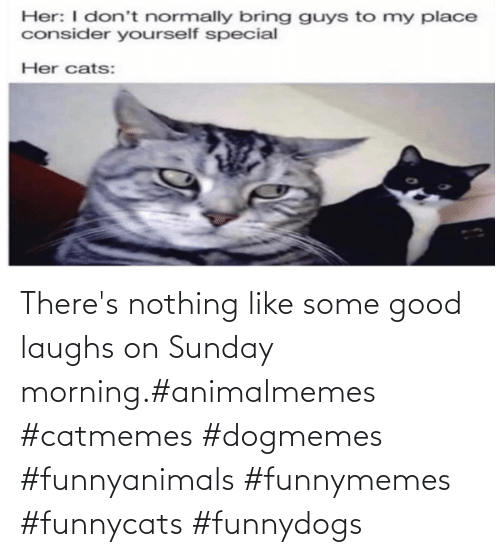 Sunday Morning: There's nothing like some good laughs on Sunday morning.#animalmemes #catmemes #dogmemes #funnyanimals #funnymemes #funnycats #funnydogs