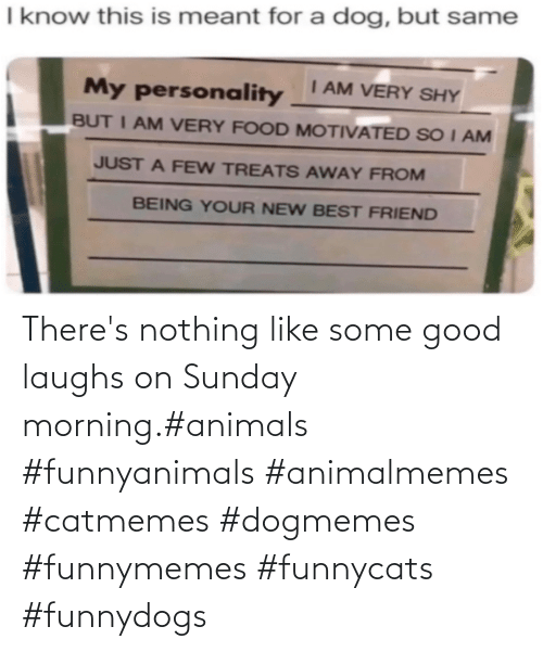 Sunday Morning: There's nothing like some good laughs on Sunday morning.#animals #funnyanimals #animalmemes #catmemes #dogmemes #funnymemes #funnycats #funnydogs