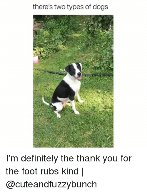 Definitely, Dogs, and Memes: there's two types of dogs I'm definitely the thank you for the foot rubs kind | @cuteandfuzzybunch