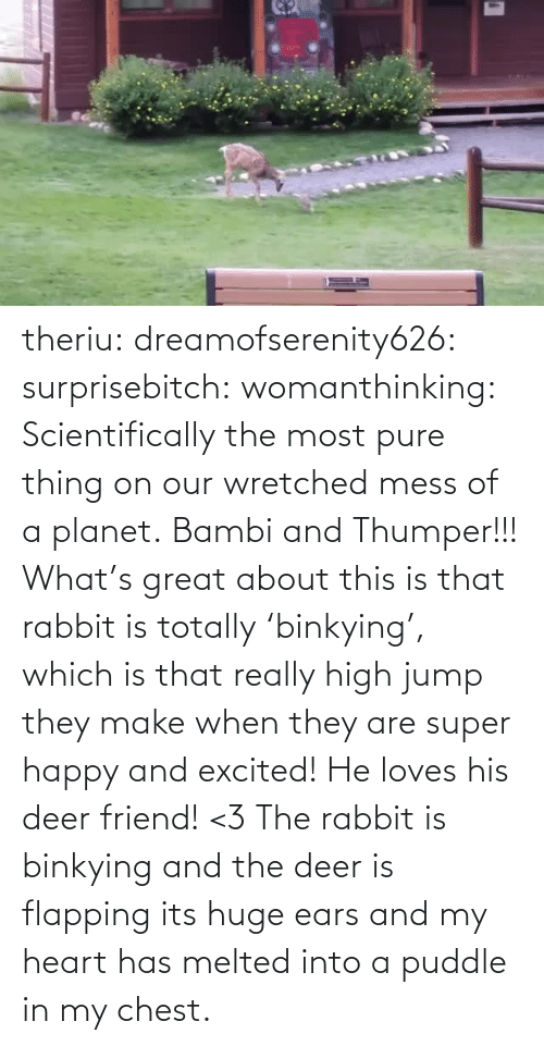 pure: theriu: dreamofserenity626:  surprisebitch:  womanthinking:  Scientifically the most pure thing on our wretched mess of a planet.  Bambi and Thumper!!!  What's great about this is that rabbit is totally 'binkying', which is that really high jump they make when they are super happy and excited! He loves his deer friend! <3  The rabbit is binkying and the deer is flapping its huge ears and my heart has melted into a puddle in my chest.