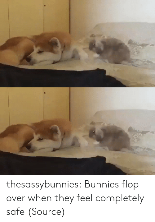 safe: thesassybunnies:  Bunnies flop over when they feel completely safe(Source)