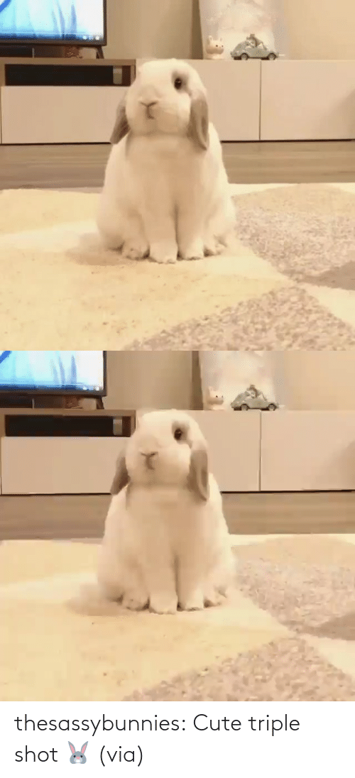 via: thesassybunnies:  Cute triple shot 🐰 (via)