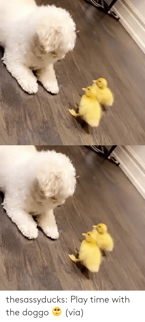 doggo: thesassyducks:  Play time with the doggo 🥺 (via)