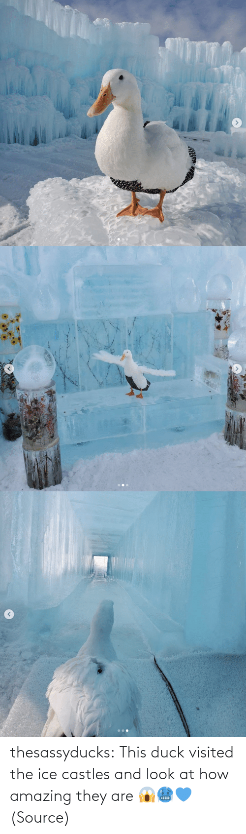 Duck: thesassyducks: This duck visited the ice castles and look at how amazing they are 😱🥶💙 (Source)