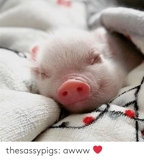 Awww: thesassypigs:  awww ❤️