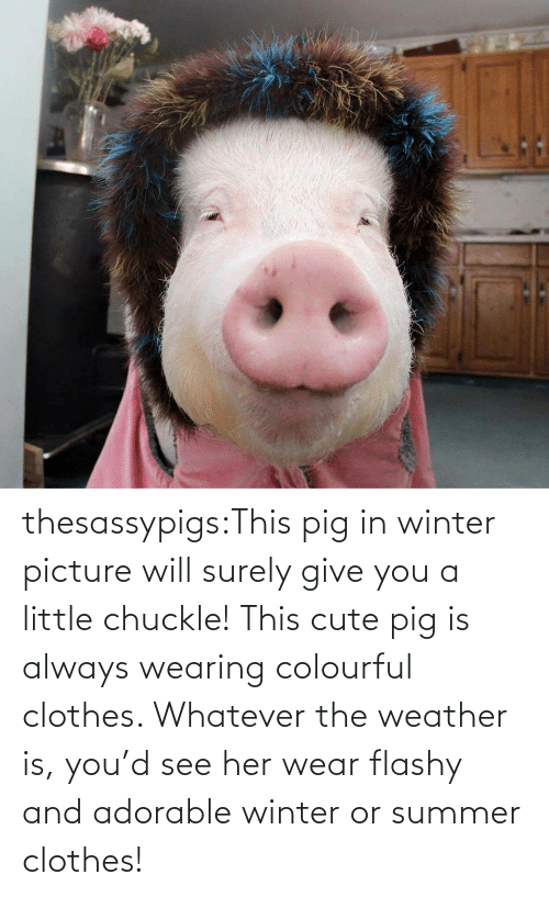 Adorable: thesassypigs:This pig in winter picture will surely give you a little chuckle! This cute pig is always wearing colourful clothes. Whatever the weather is, you'd see her wear flashy and adorable winter or summer clothes!