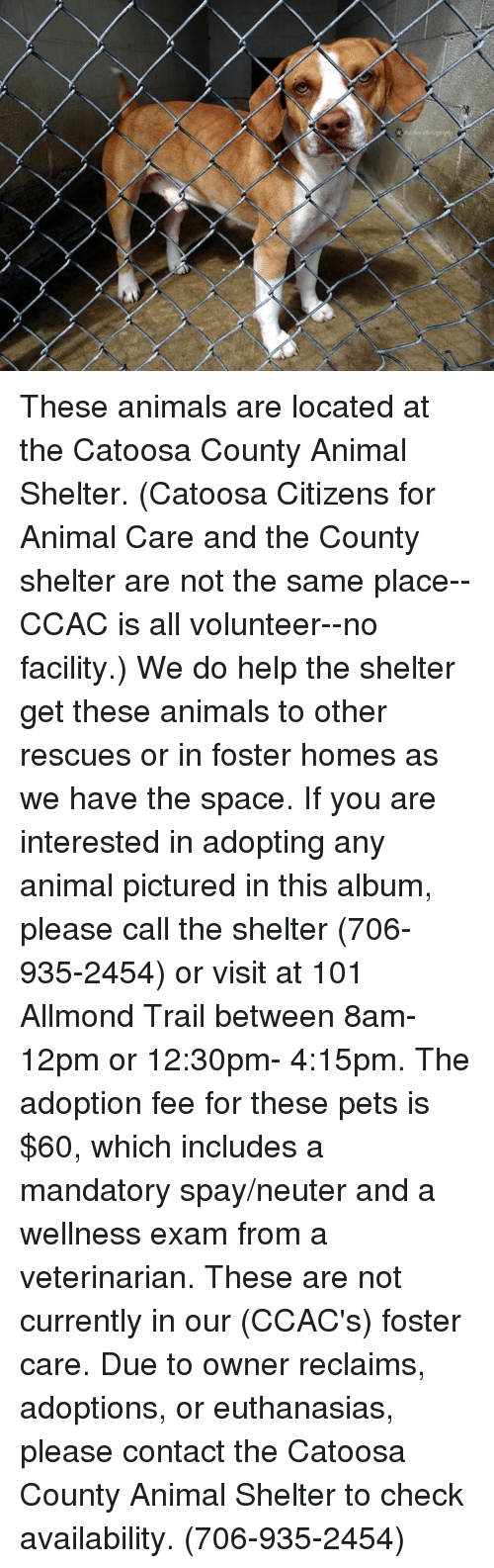neuter: These animals are located at the Catoosa County Animal Shelter.  (Catoosa Citizens for Animal Care and the County shelter are not the same place--CCAC is all volunteer--no facility.)  We do help the shelter get these animals to other rescues or in foster homes as we have the space.  If you are interested in adopting any animal pictured in this album, please call the shelter (706-935-2454) or visit at 101 Allmond Trail between 8am-12pm or 12:30pm- 4:15pm. The adoption fee for these pets is $60, which includes a mandatory spay/neuter and a wellness exam from a veterinarian.  These are not currently in our (CCAC's) foster care.  Due to owner reclaims, adoptions, or euthanasias, please contact the Catoosa County Animal Shelter to check availability. (706-935-2454)