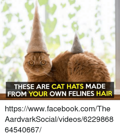 Cats Hat Own Hair