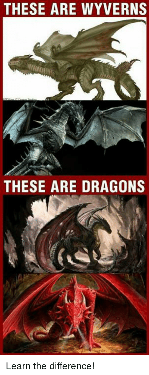 THESE ARE WYVERNS THESE ARE DRAGONS Learn the Difference ...