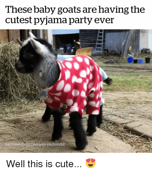 Cute, Party, and Baby: These baby goats are having the  cutest pyjama party ever  Sunflower Fa  m Creamery via Storyful Well this is cute... 😍