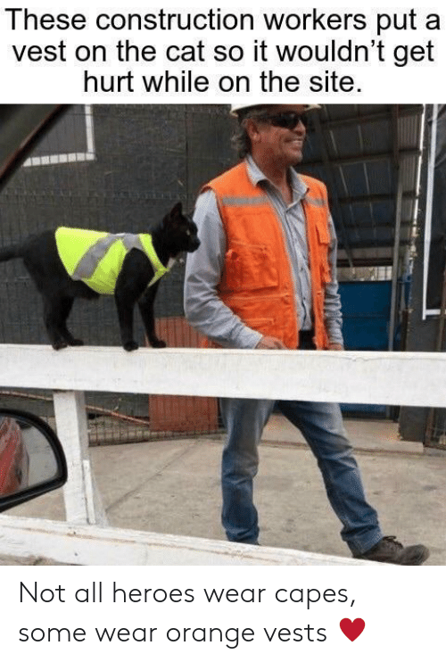 Construction: These construction workers put  vest on the cat so it wouldn't get  hurt while on the site. Not all heroes wear capes, some wear orange vests ♥️