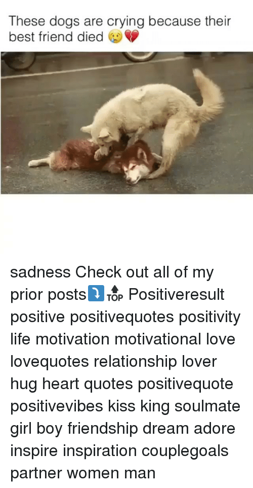 Best Friend, Crying, and Dogs: These dogs are crying because their  best friend died sadness Check out all of my prior posts⤵🔝 Positiveresult positive positivequotes positivity life motivation motivational love lovequotes relationship lover hug heart quotes positivequote positivevibes kiss king soulmate girl boy friendship dream adore inspire inspiration couplegoals partner women man