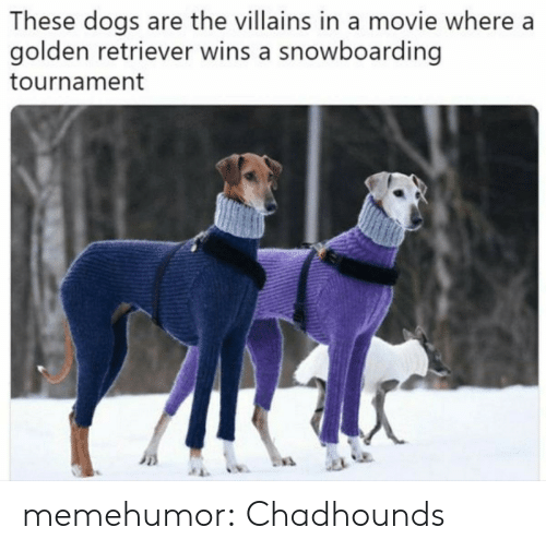 Tournament: These dogs are the villains in a movie where a  golden retriever wins a snowboarding  tournament memehumor:  Chadhounds