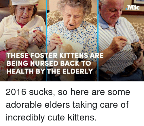 cute kittens: THESE FOSTER KITTENS ARE  BEING NURSED BACK TO  HEALTH BY THE ELDERLY  Mic 2016 sucks, so here are some adorable elders taking care of incredibly cute kittens.