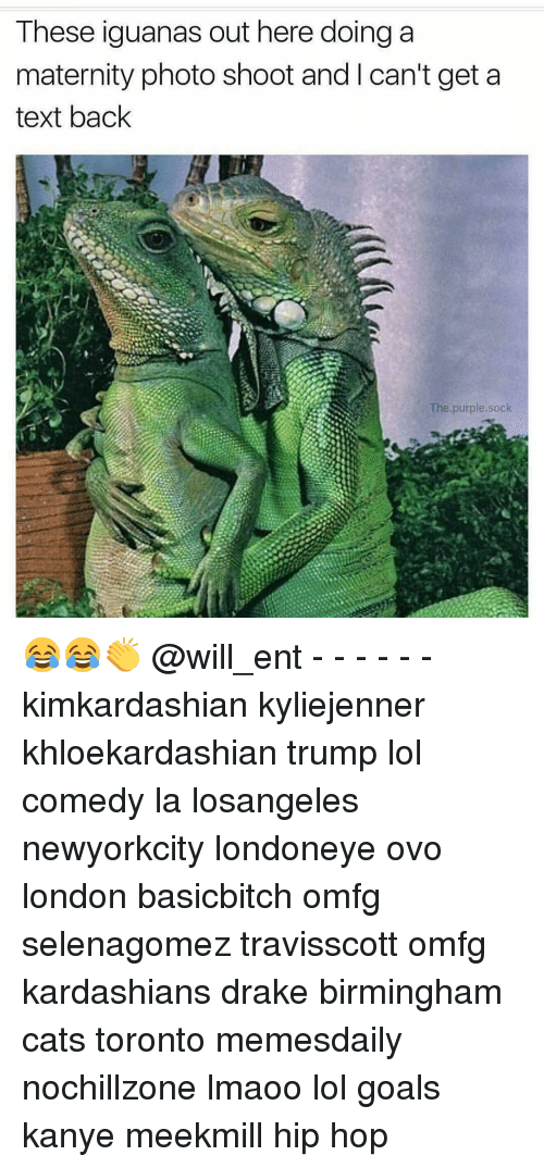 Cats, Drake, and Goals: These iguanas out here doing a  maternity photo shoot and l can't get a  text back  The purple sock 😂😂👏 @will_ent - - - - - - kimkardashian kyliejenner khloekardashian trump lol comedy la losangeles newyorkcity londoneye ovo london basicbitch omfg selenagomez travisscott omfg kardashians drake birmingham cats toronto memesdaily nochillzone lmaoo lol goals kanye meekmill hip hop