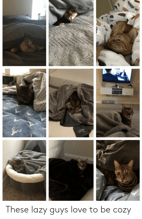 Lazy Guys: These lazy guys love to be cozy