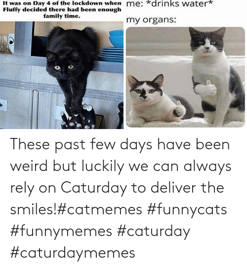 luckily: These past few days have been weird but luckily we can always rely on Caturday to deliver the smiles!#catmemes #funnycats #funnymemes #caturday #caturdaymemes