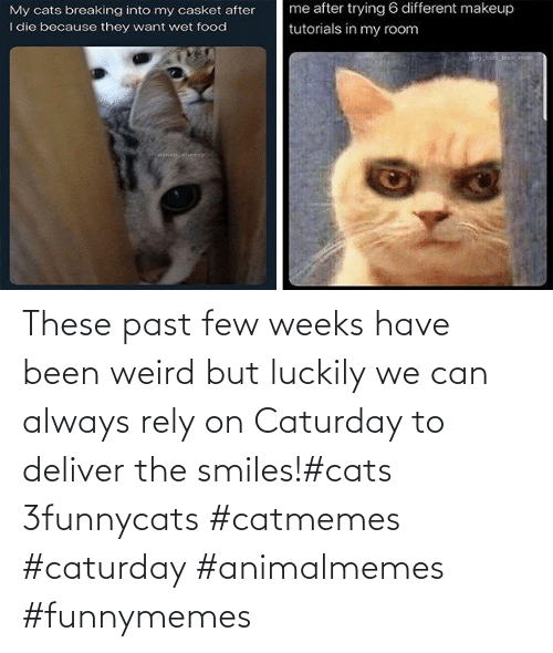 luckily: These past few weeks have been weird but luckily we can always rely on Caturday to deliver the smiles!#cats 3funnycats #catmemes #caturday #animalmemes #funnymemes