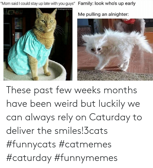 Weeks: These past few weeks months have been weird but luckily we can always rely on Caturday to deliver the smiles!3cats #funnycats #catmemes #caturday #funnymemes