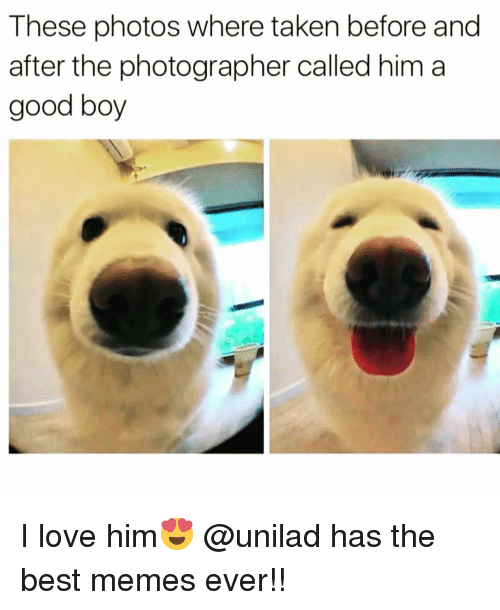 Funny, Best Memes, and Best Memes Ever: These photos where taken before and  after the photographer called him a  good boy I love him😍 @unilad has the best memes ever!!