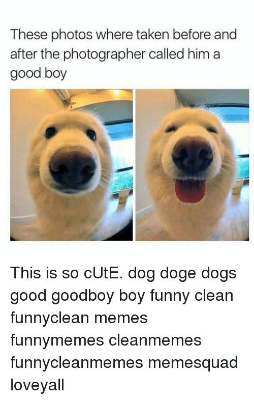 Funny clean dog memes - photo#31