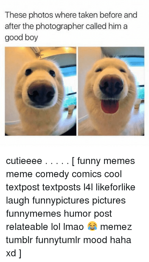 Funny, Lmao, and Lol: These photos where taken before and  after the photographer called him a  good boy cutieeee . . . . . [ funny memes meme comedy comics cool textpost textposts l4l likeforlike laugh funnypictures pictures funnymemes humor post relateable lol lmao 😂 memez tumblr funnytumlr mood haha xd ]