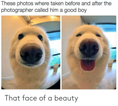 A Good Boy: These photos where taken before and after the  photographer called him a good boy That face of a beauty