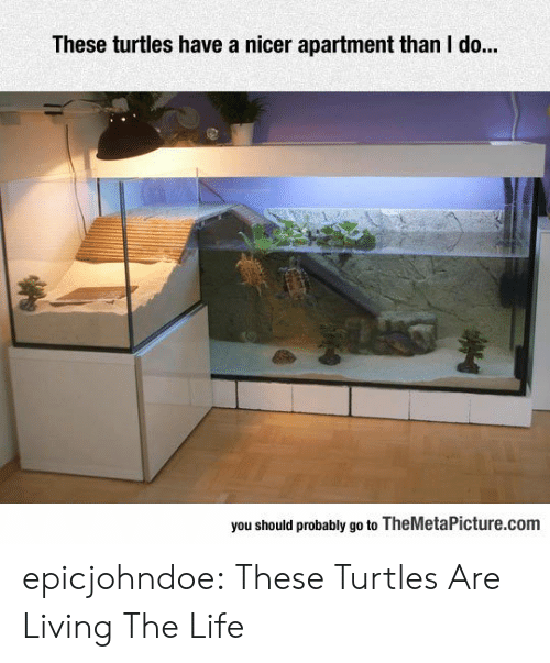 Living The Life: These turtles have a nicer apartment than I do..  you should probably go to TheMetaPicture.com epicjohndoe:  These Turtles Are Living The Life