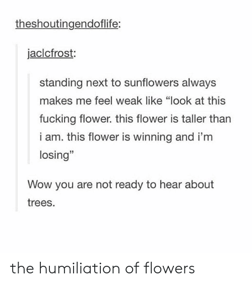 """Sunflowers: theshoutingendoflife:  jaclcfrost:  standing next to sunflowers always  makes me feel weak like """"look at this  fucking flower. this flower is taller tharn  i am. this flower is winning and i'm  losing""""  15  Wow you are not ready to hear about  trees. the humiliation of flowers"""