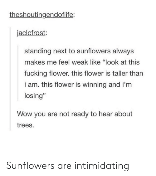 """Sunflowers: theshoutingendoflife:  jaclcfrost:  standing next to sunflowers always  makes me feel weak like """"look at this  fucking flower. this flower is taller tharn  i am. this flower is winning and i'm  losing""""  Wow you are not ready to hear about  trees. Sunflowers are intimidating"""