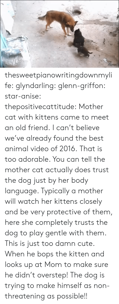 old friend: thesweetpianowritingdownmylife:  glyndarling:  glenn-griffon:  star-anise:  thepositivecattitude:  Mother cat with kittens came to meet an old friend.  I can't believe we've already found the best animal video of 2016.  That is too adorable. You can tell the mother cat actually does trust the dog just by her body language. Typically a mother will watch her kittens closely and be very protective of them, here she completely trusts the dog to play gentle with them. This is just too damn cute.  When he bops the kitten and looks up at Mom to make sure he didn't overstep!  The dog is trying to make himself as non-threatening as possible!!