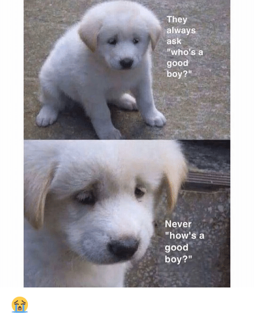 """Whos A Good Boy: They  always  ask  """"who's a  good  boy?""""  Never  """"how's a  good  boy?"""" 😭"""
