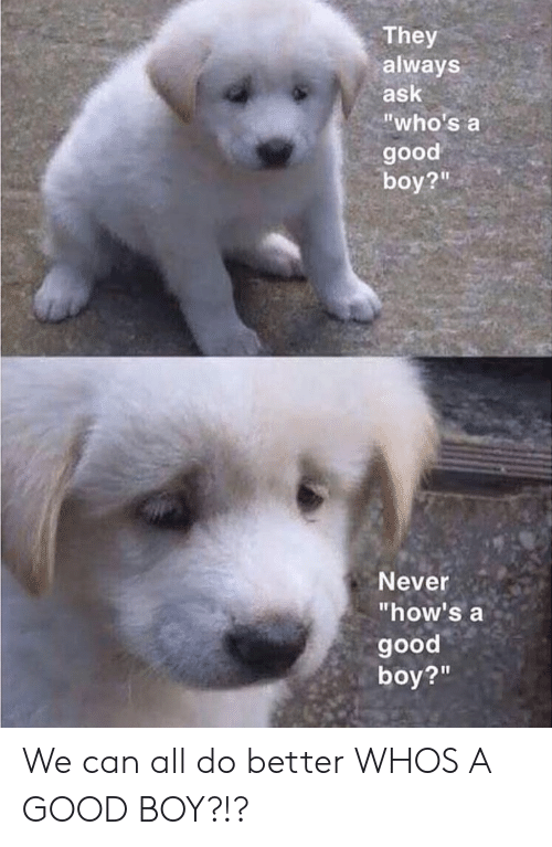 """Whos A Good Boy: They  always  ask  """"who's a  good  boy?""""  Never  """"how's a  good  boy?""""  21 We can all do better WHOS A GOOD BOY?!?"""