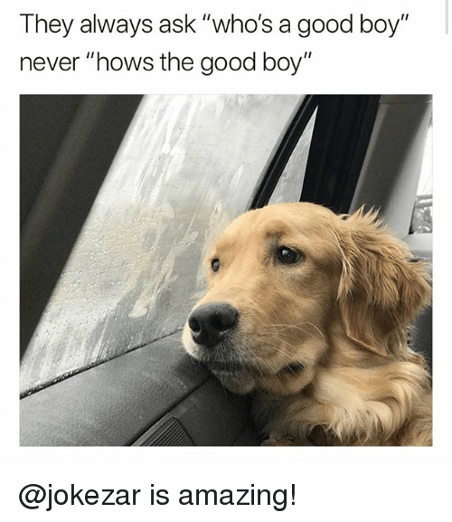 "Funny, Meme, and Good: They always ask ""who's a good boy""  never ""hows the good boy"" @jokezar is amazing!"