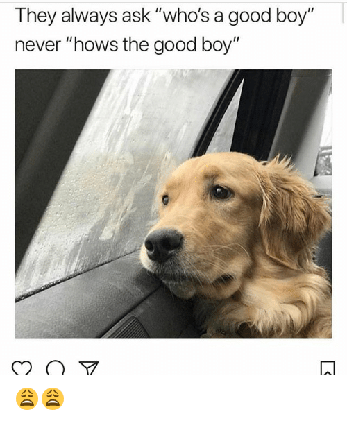 """Memes, Good, and Never: They always ask """"who's a good boy""""  never """"hows the good boy"""" 😩😩"""