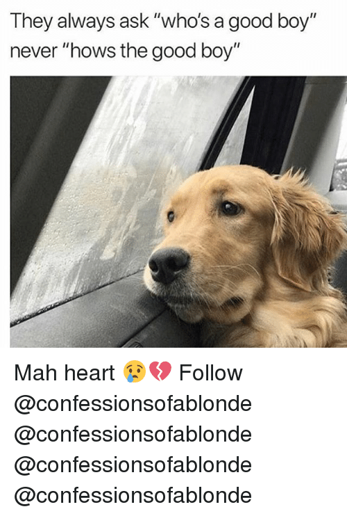 "Memes, Good, and Heart: They always ask ""who's a good boy""  never ""hows the good boy"" Mah heart 😢💔 Follow @confessionsofablonde @confessionsofablonde @confessionsofablonde @confessionsofablonde"