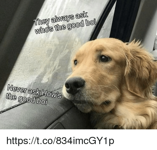 Memes, Good, and Never: They always ask  whos the good bo  0  Never ashk  the good boi  How's https://t.co/834imcGY1p
