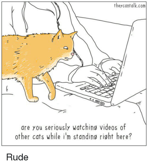 Cats, Memes, and Rude: they can talk.com  AA  are you seriously watching videos of  other cats while im standing right here? Rude