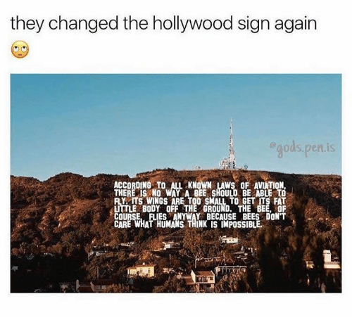Aviators: they changed the hollywood sign again  gods. pen is  ACCORDING TO L KNOWN LAWS OF AVIATION  THERE IS NO WAY A BEE SHOULD BE ABLE TO  Y ITS WINGS ARE TOO SMALL TO GET ITS FAT  LITTLE BODY OFF THE GROUND. THE BEE, OF  COURSE, FLIES ANYWAY BECAUSE BEES DON'T  CARE WHAT HUMANS THINK IS IMPOSSIBLE
