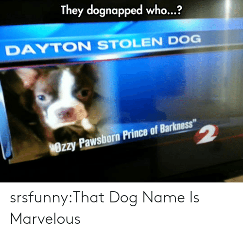 "Marvelous: They dognapped who...?  DAYTON STOLEN DOG  Wrzy Pawsborn Prince of Barkness"" srsfunny:That Dog Name Is Marvelous"