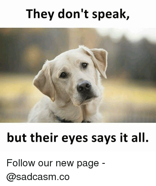 Memes, 🤖, and Page: They don't speak,  but their eyes says it all. Follow our new page - @sadcasm.co