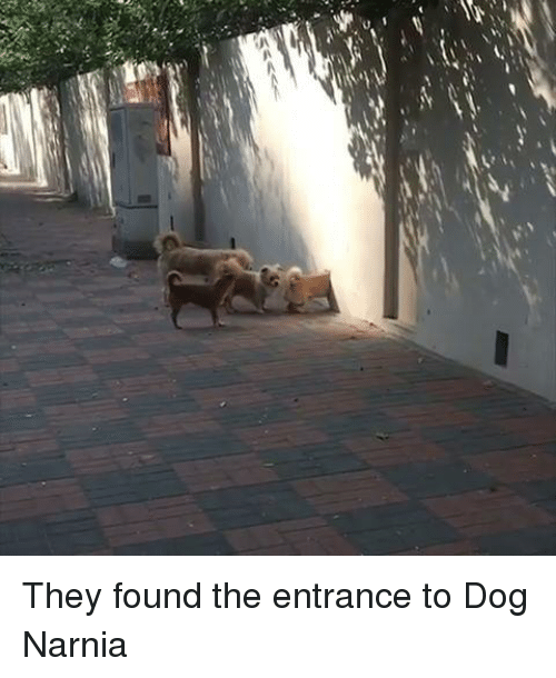 narnia: They found the entrance to Dog Narnia