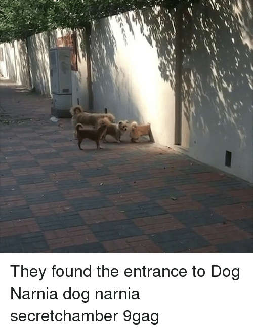 narnia: They found the entrance to Dog Narnia dog narnia secretchamber 9gag
