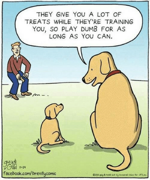 Tans: THEY GIVE YOU A LOT OF  TREATS WHILE THEY RE TRAINING  YOu, so PLAY DUMB FOR AS  LONG AS YOU CAN  11-24  facebook.com/brevitycomic  for S  Oal gy&red sst tans