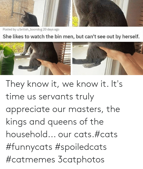 Masters: They know it, we know it. It's time us servants truly appreciate our masters, the kings and queens of the household... our cats.#cats #funnycats #spoiledcats #catmemes 3catphotos