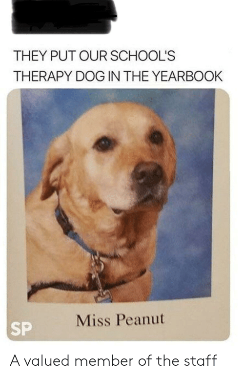 Yearbook: THEY PUT OUR SCHOOL'S  THERAPY DOG IN THE YEARBOOK  Miss Peanut  SP A valued member of the staff