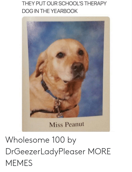 Yearbook: THEY PUT OUR SCHOOL'S THERAPY  DOG IN THE YEARBOOK  Miss Peanut Wholesome 100 by DrGeezerLadyPleaser MORE MEMES