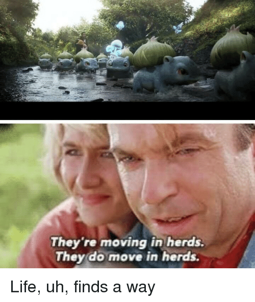 moving in: They 're moving in herds.  They do move in herds. Life, uh, finds a way