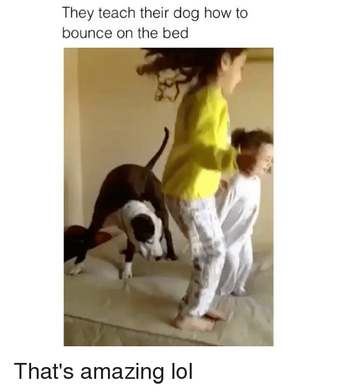 Lol, How To, and Amazing: They teach their dog how to  bounce on the bed That's amazing lol
