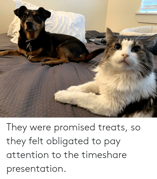 timeshare: They were promised treats, so they felt obligated to pay attention to the timeshare presentation.